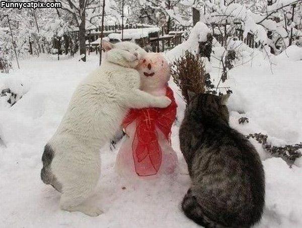 谁才是雪人? - 雪山 - .