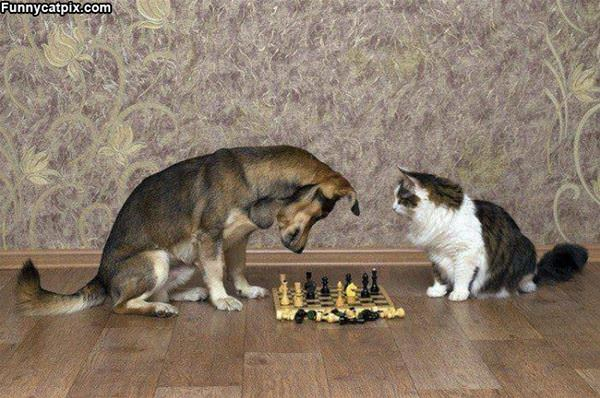Lets Play Some Chess