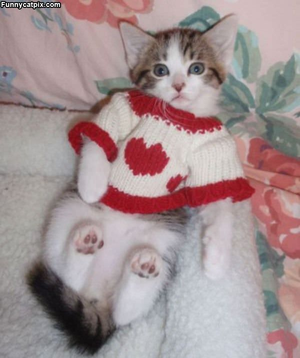 Like My Sweater