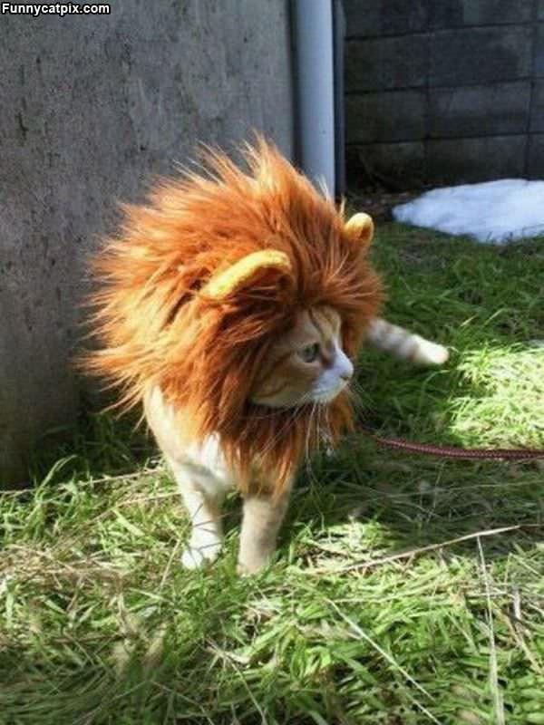 Lion Cat Roar