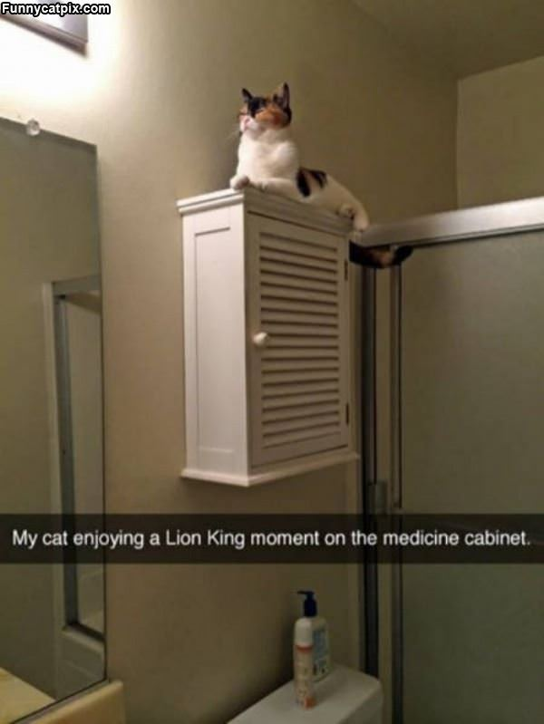 Lion King Moment