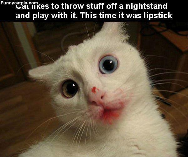 Lipstick Cat