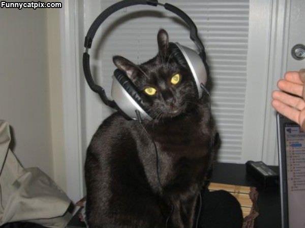 Listening To Musics
