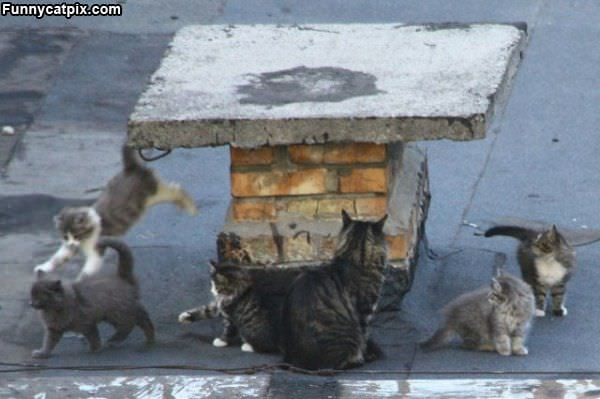 Little Cat Army
