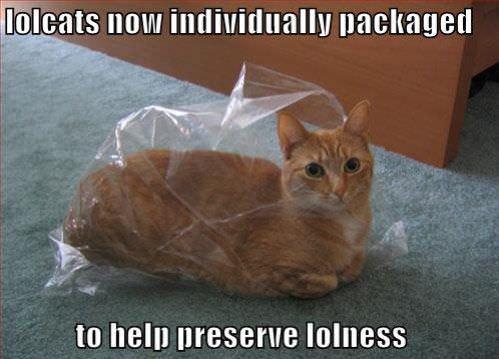http://www.funnycatpix.com/_pics/Lolness.jpg