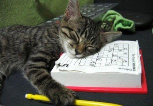 Long Tiring Day