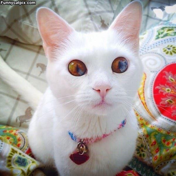 Look At My Huge Eyes