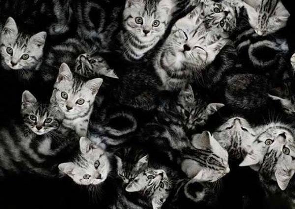 http://www.funnycatpix.com/_pics/Lots_Of_Cats501.jpg
