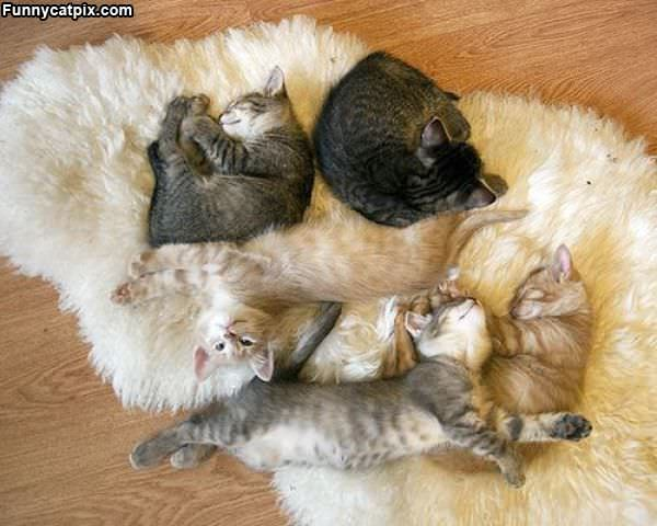 Lots Of Cute Kittens