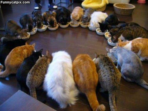 大家族吃饭 - 雪山 - .
