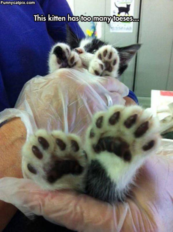 多手指多脚趾猫咪 - 雪山 - .
