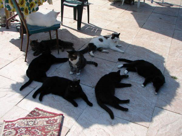Lotsof Cats