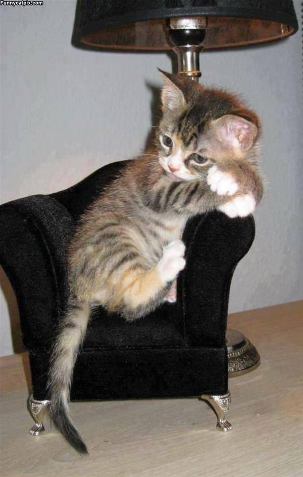 Lounge Cat