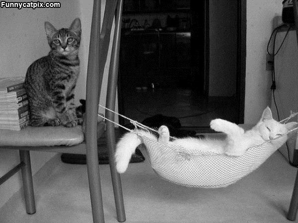 你家有这样的猫咪睡床吗? - 雪山 - .
