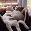 Lounging Cats