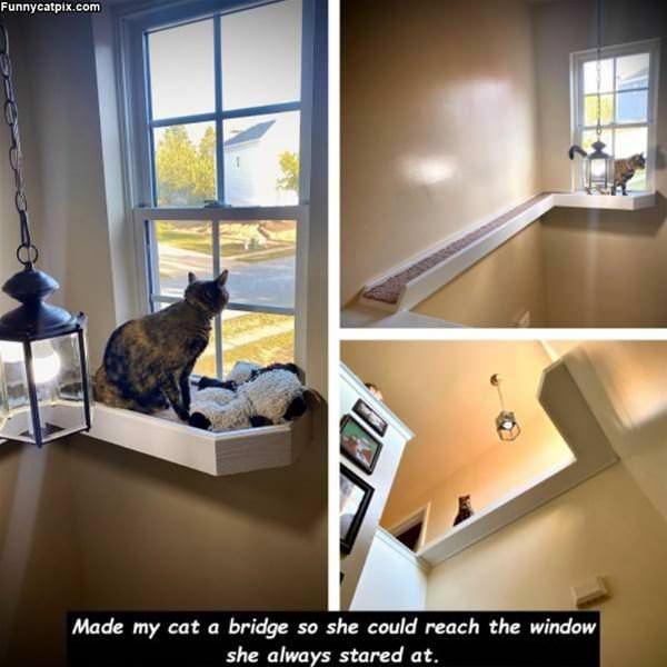 Made My Cat A Bridge