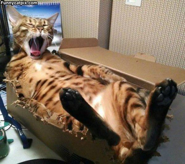 Mah Fun Box