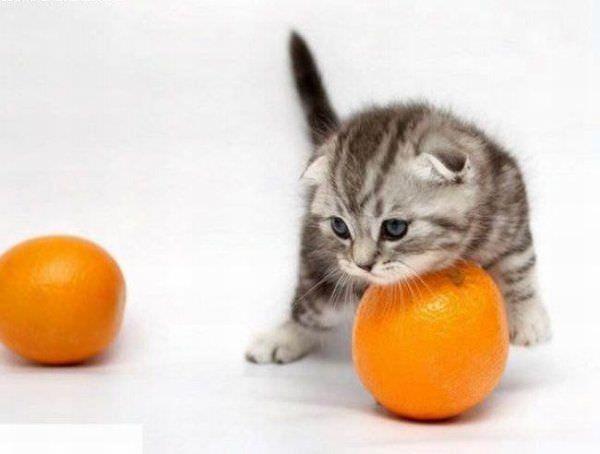 Mah Orange
