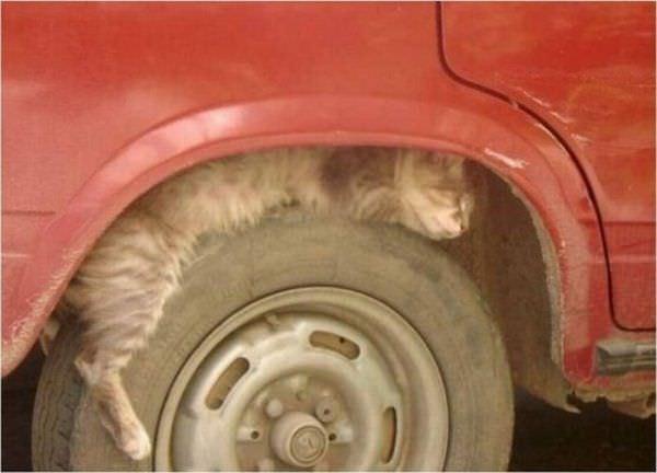 Mah Tire