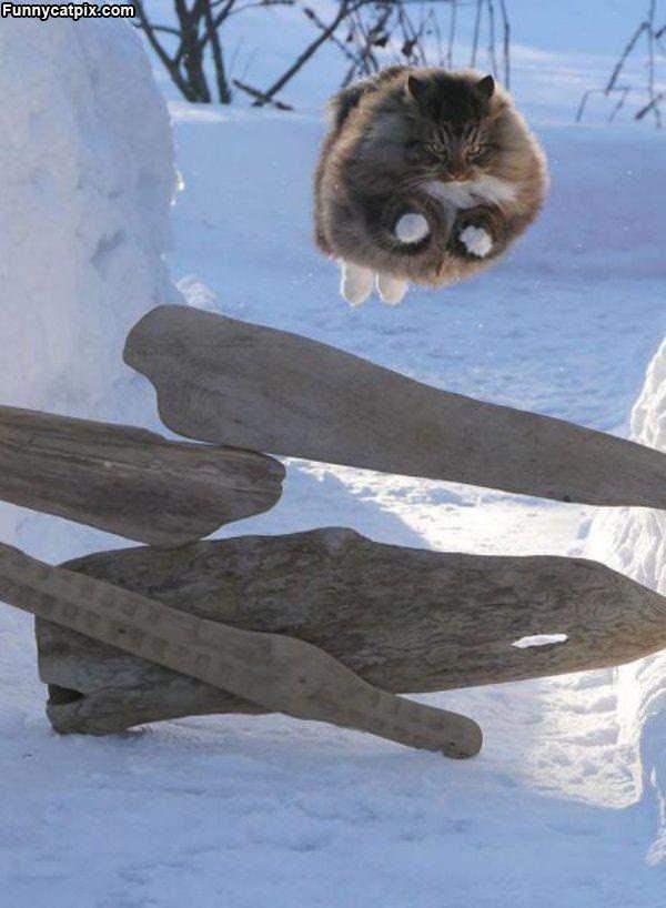 Majestic Flying Cat