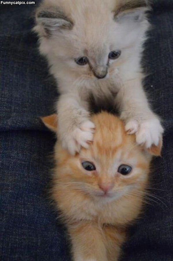 8 weeks kitten