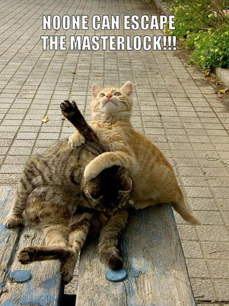 MasterLock Cat