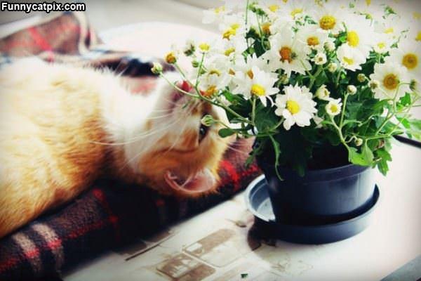 Me Loves Flowers