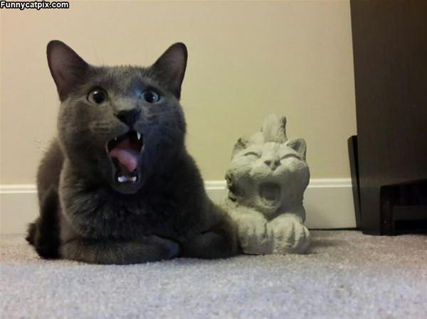 Meoooooow