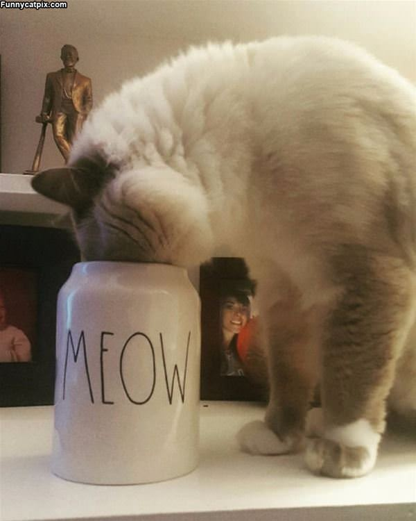 Meow Cup