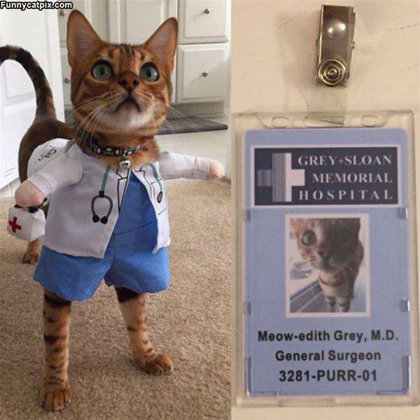 Meow Edith