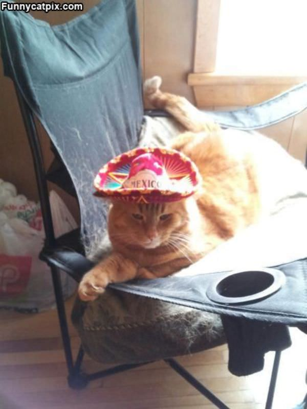 Funny Cat Picture Thread! - Page 4 Mexico_Cat