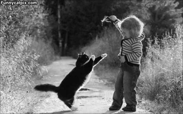 戏猫 - 雪山 - .