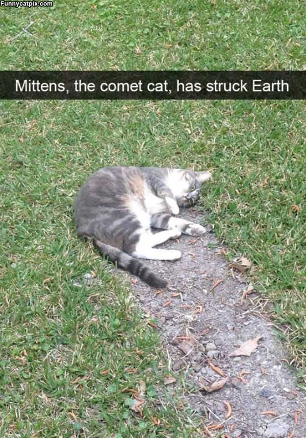Mittens Has Struck Earth