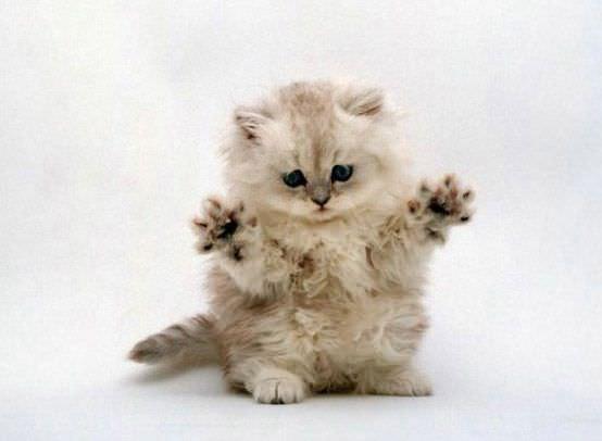 Monster Kitten