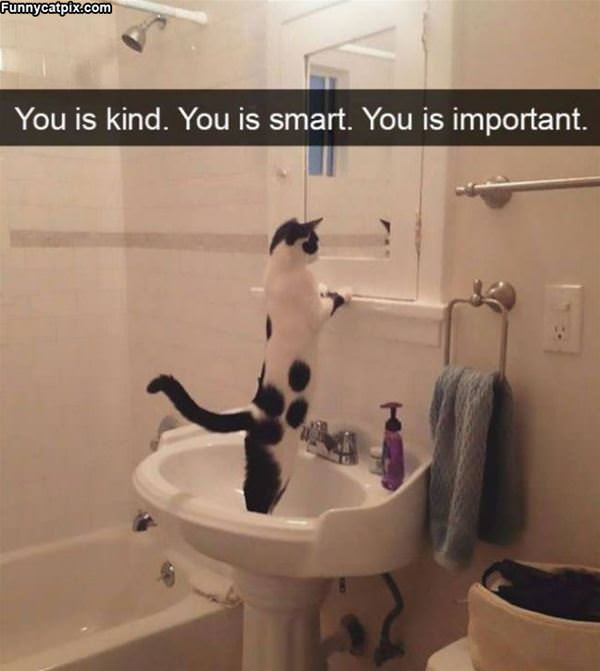 Motivational Cat