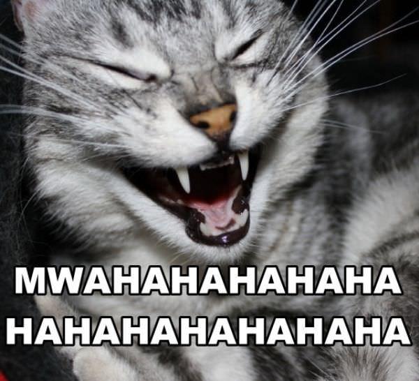 http://www.funnycatpix.com/_pics/Mwahaha.jpg