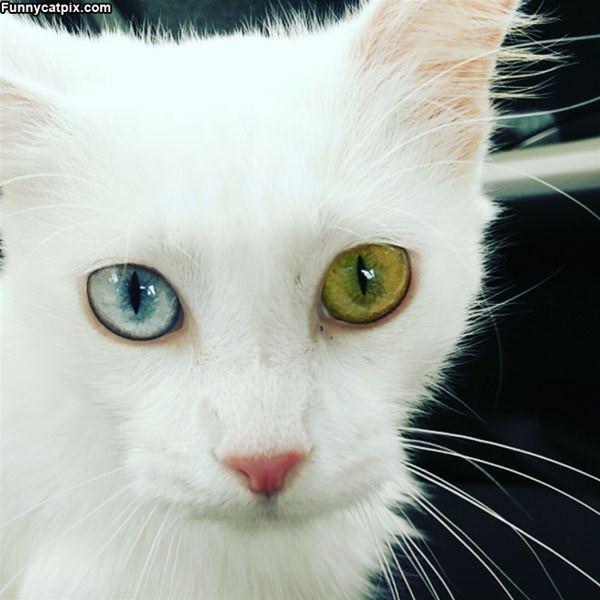 My 2 Eyes