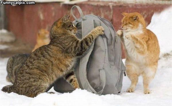 My Bag No My Bag