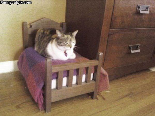 My Cat Bed