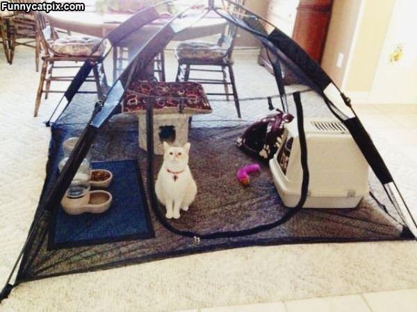 My Cat Fort