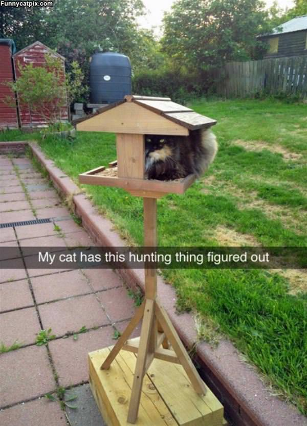 My Cat Has This Hunting Thing Figured Out