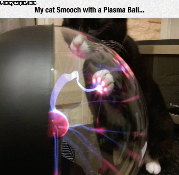 My Cat With A Plasma Ball