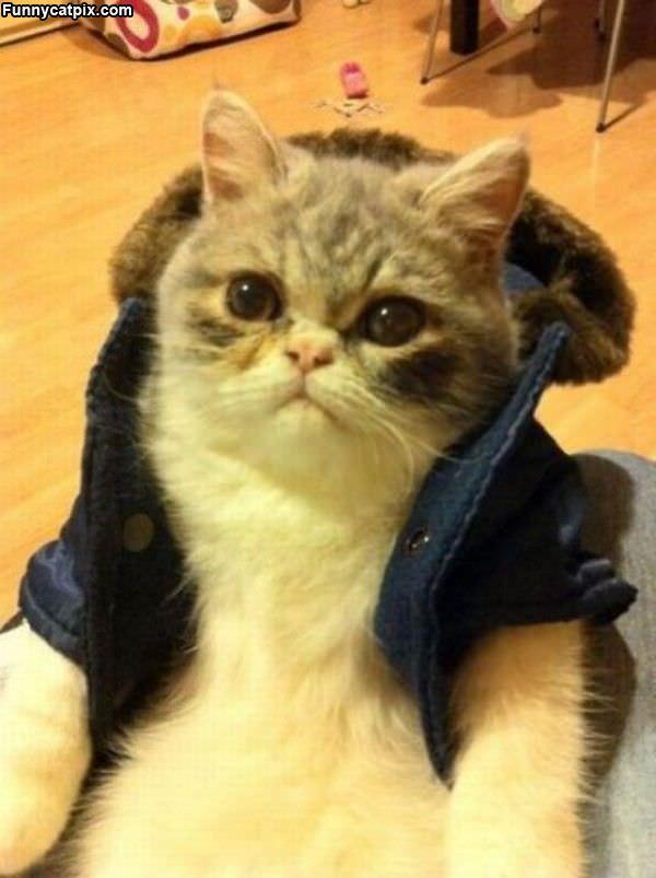 My Cool Coat