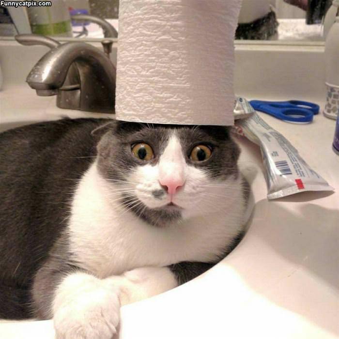 My Crazy Hat