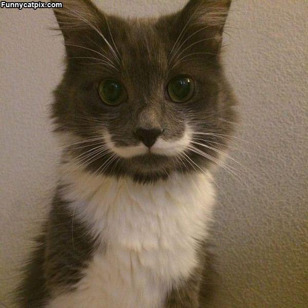 My Cute Mustache