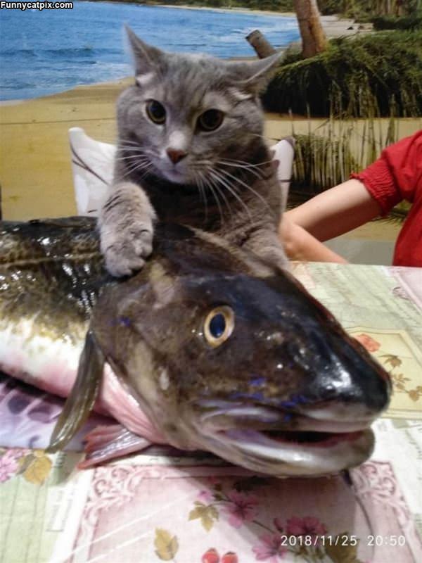 My Fishy