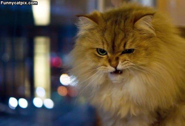 My Grrr Face