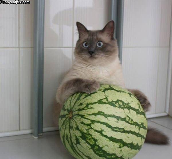 My Melon