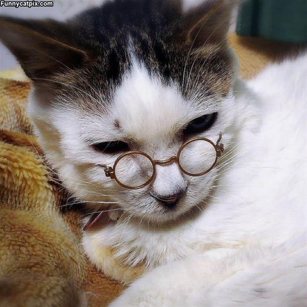 My Nerdy Glasses