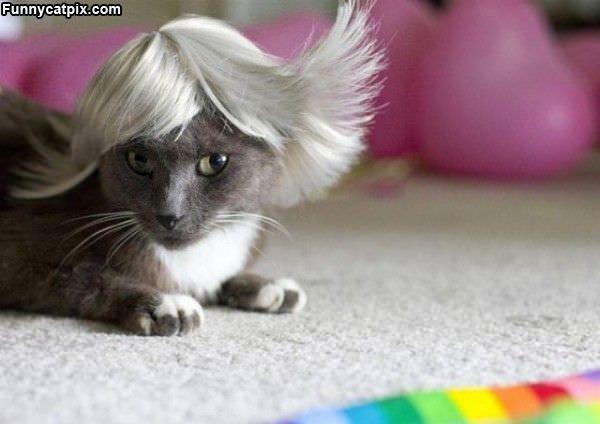 My New Wig